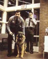 Самые зубастые полицейские, фото фотография