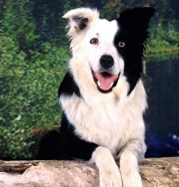 Мочекаменная болезнь у собак: откуда она берется и как ее лечить?. Фото фотография, собаки