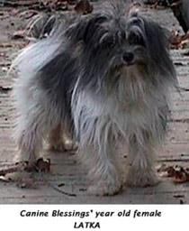 райбс санс, породы собак, фото фотография