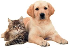 Зимние опасности для собак и кошек, фото фотография