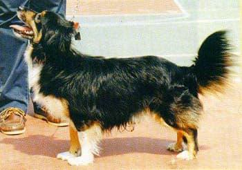 Мелитио кинидио, породы собак, фото фотография c