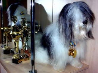 Одис, породы собак, фото фотография c