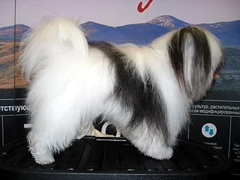 Одис породы собак фото фотография c