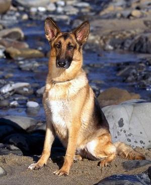 Берем взрослую собаку, фото фотография