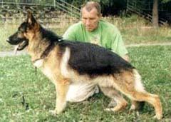 Немецкая овчарка, фото, фотография