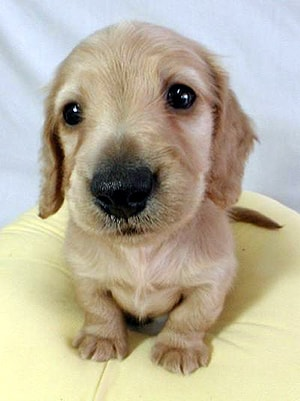 Болезни собак связанные с лишним