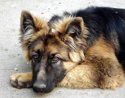 Уход за глазами собаки а также