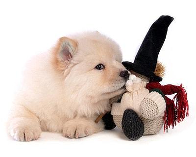 Игрушки для собак как инструмент развития, фото фотография собаки