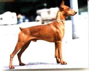 http://zooclub.ru/attach/dogs/Image53.jpg