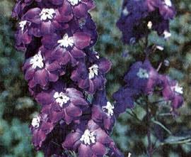 Травянистые красивоцветущие или