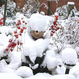 садовый ежик под снегом, фото, фотография