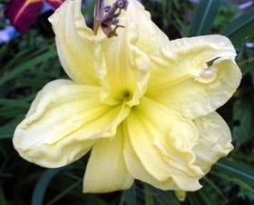 желтый цветок, фото, фотография www.zooclub.ru