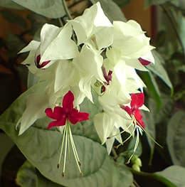 Комнатный цветок фото фотография www