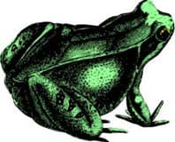 лягушка, клипарт