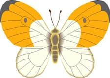 бабочка, клипарт