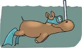 бегемот в маске плывет под водой, клипарт