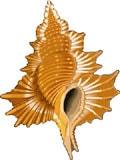 морская раковина, клипарт