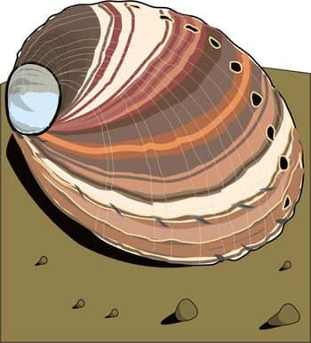 морская ракушка, клипарт