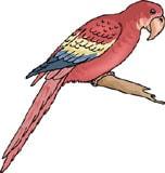 попугай ара, клипарт
