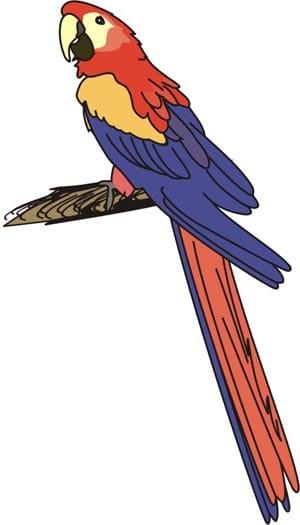 Попугай ара, клипарты ара, клип арт ...: zooclub.ru/fotogal/clip/birds/266a.shtml