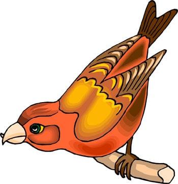 Клест, клипарты клест, клип арт, clipart <strong>рисунок</strong> birds parrot, скачать...