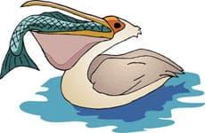 пеликан, клипарт