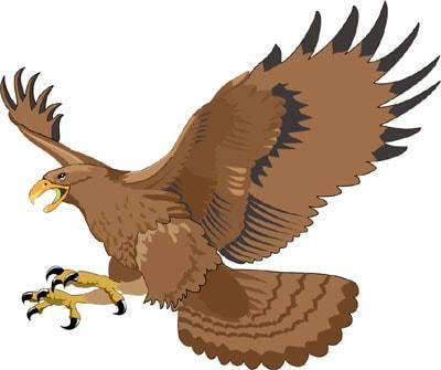 Орел, клипарты, клип арт, clipart birds parrot ...: zooclub.ru/fotogal/clip/birds/91a.shtml