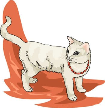 Кошка клипарт