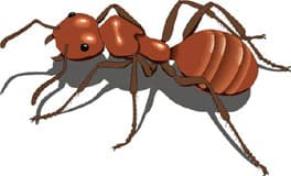 красный муравей, клипарт
