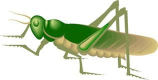 саранча перелетная или обыкновенная, цикада, клипарт