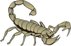 скорпион, клипарт