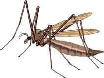 комар, клипарт