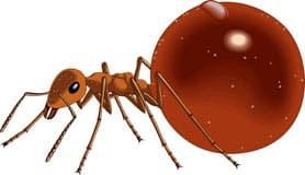муравей, клипарт