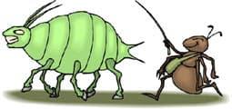 муравей и тля, клипарт