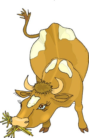 Корова жующая траву картинка