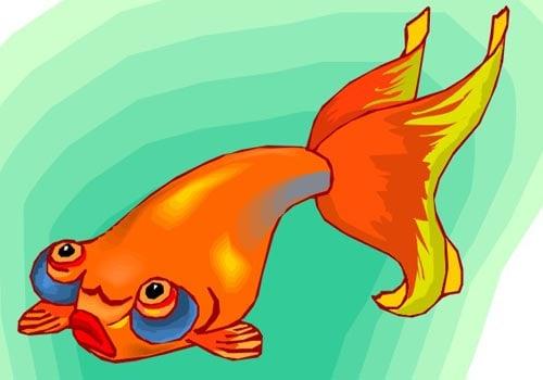 Золотая рыбка звездочет, клипарт ...: www.zooclub.ru/fotogal/clip/fish/435a.shtml