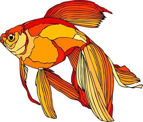 Золотая рыбка, клипарт, клипарты ...: zooclub.ru/fotogal/clip/fish/476a.shtml
