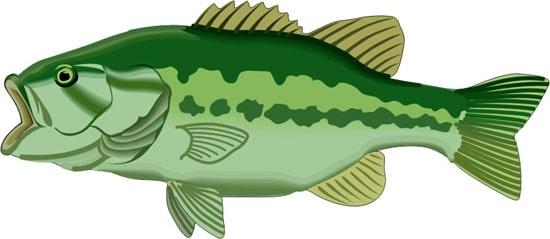 рыба клипарт:
