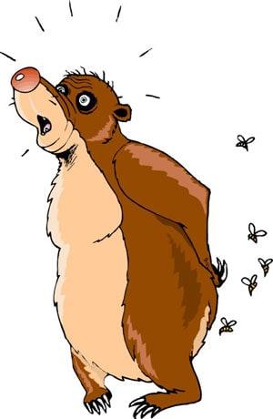 Медведя жалят пчелы