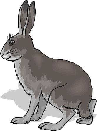 заяц клипарт: