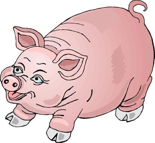 фото свиньи скачать
