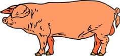 свинья, клипарт