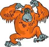 орангутанг, обезьяна, клипарт
