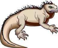 игуана, клипарт