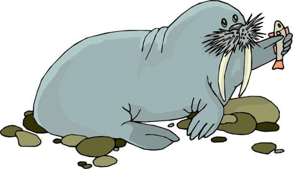морские млекопитающие, клипарт