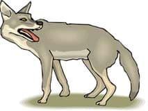 серый волк, пантера, клипарт