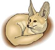 большеухая лисица, клипарт