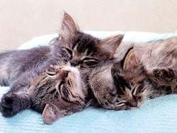спящие котята, обои для рабочего стола, рабочий стол