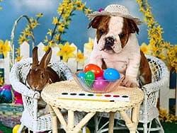 щенок английского бульдога с кроликом, обои для рабочего стола, рабочий стол