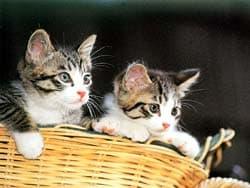 котята в корзинке, обои для рабочего стола, рабочий стол